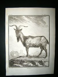 Buffon: C1770 Goat, Antique Print
